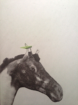 Hästen är en grafisk bild i fotopolymer på en häst  med en gräshoppa av Annette Ronàld